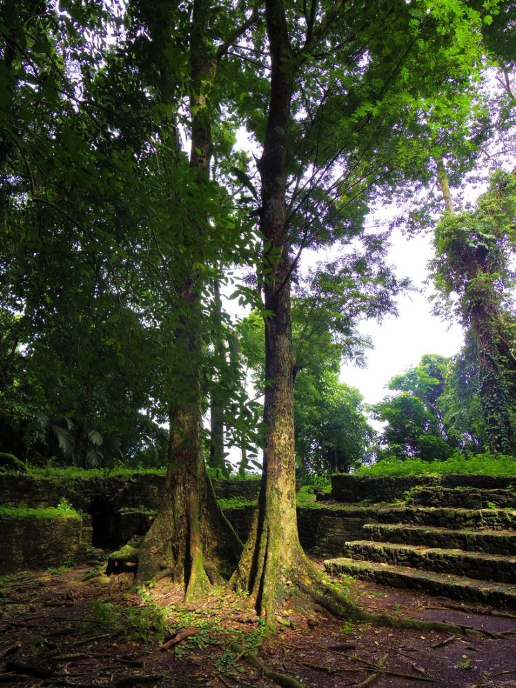 jungle-arbres-palenque-mexique-larchivoyageuse