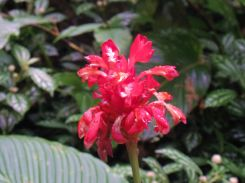 jungle-fleur-laspozas-mexique-larchivoyageuse